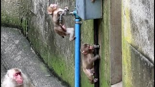 Baby monkey playing with a water pipe