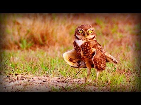 Brazil: Protected Nature (full documentary)