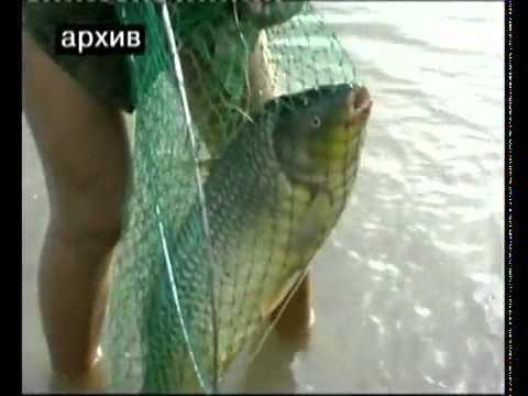 """Клевое место """"Рыбалка в Астрахани"""""""