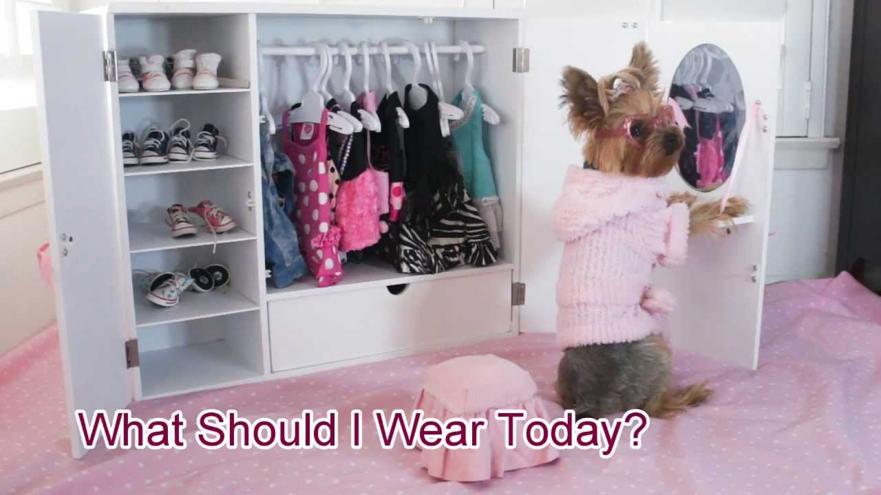 Doggie Closet Funny Video Of Dog Chloe Polka Dot Yorkie Youtube