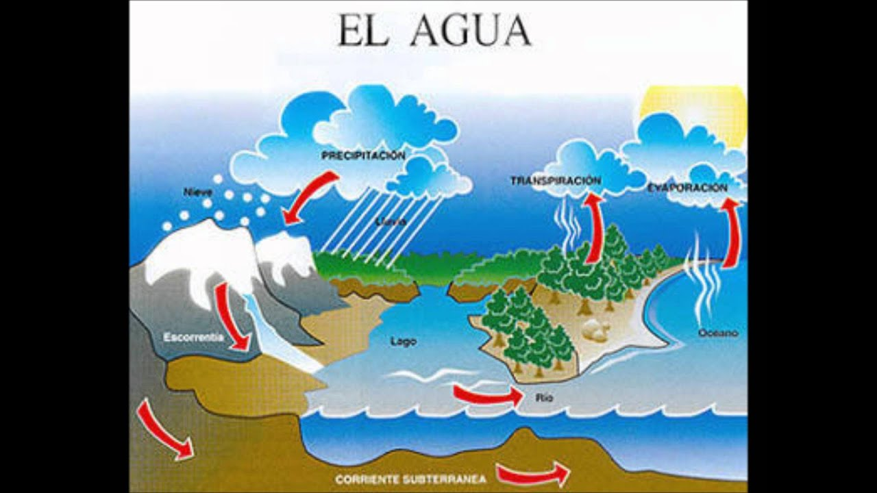 Proyecto integrador sistemas pluviales c mo reutilizar - Agua de lluvia ...