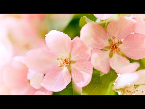 Download Relaxing Morning Music - Positive Energy and Stress Relief (Taylor)