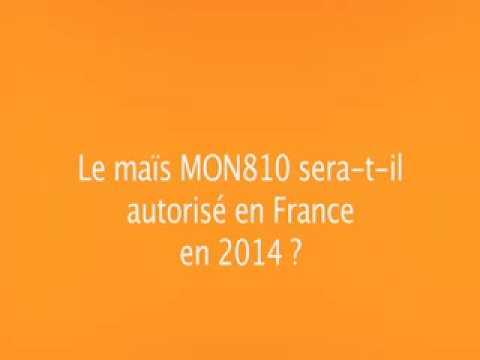 France : où en est-on du moratoire sur le maïs OGM MON810 de Monsanto ? 19/02/14