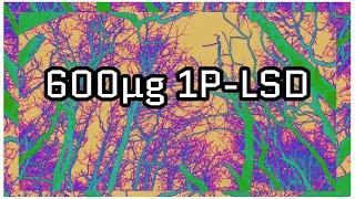 600µg 1P-LSD + 500µg Flunitrazolam Tripbericht