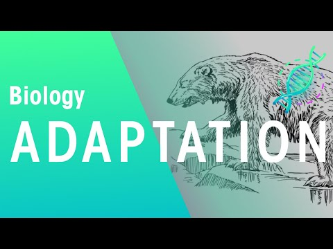 What is adaptation? | Ecology and Environment | the virtual school