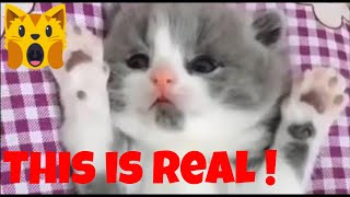 🙀Funny kittens and cute cats compilation😻😂 - Funny Cat Videos