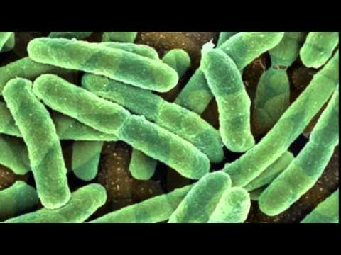 Does Our Gut Bacteria Make Us Food Zombies