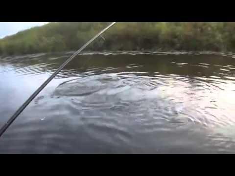 видео ловли щуки на спиннинг в омске