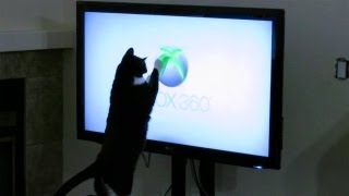 Cat Attacks XBOX 360 Logo