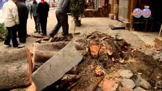 العناية الإلهية أنقذت سكان بولاق من الشجرة المفترية