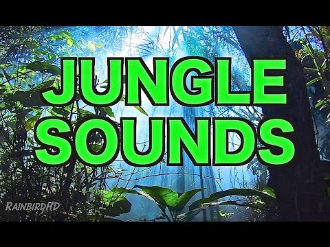 8 Hours of Jungle Sounds | Ambient Nature Sounds for Relaxation HD