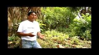 Yerbas y plantas curativas