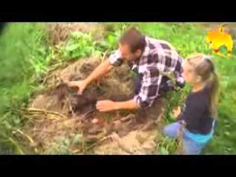 Видео как сажать картошку