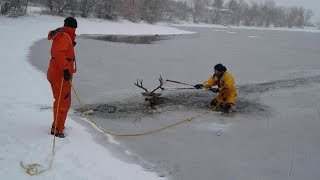 Rescue Crew Drags Deer Stuck in Frozen Pond to Safety by His Antlers