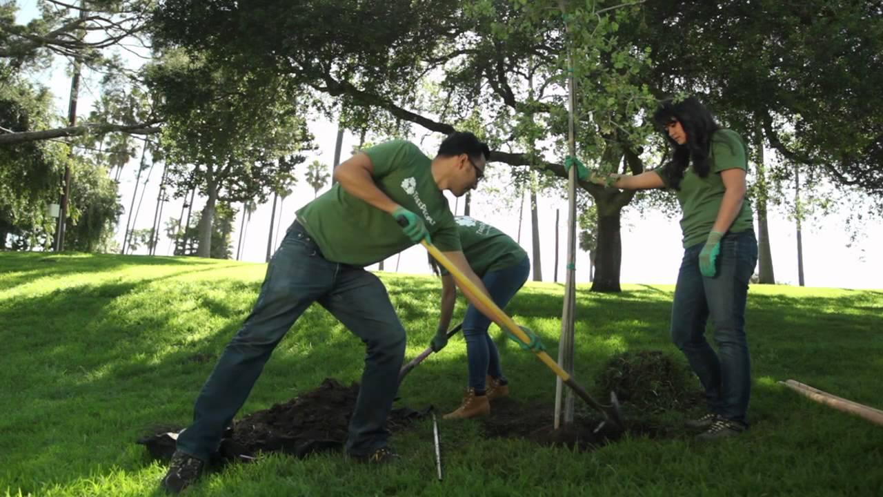 Treepeople c mo plantar un rbol youtube for Arboles para plantar en invierno