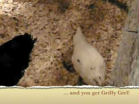 Grilly Girl, the Polish-Cornish Game hen (?)