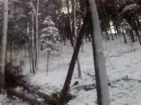 prace leśne