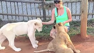 Playing With Lions Cubs