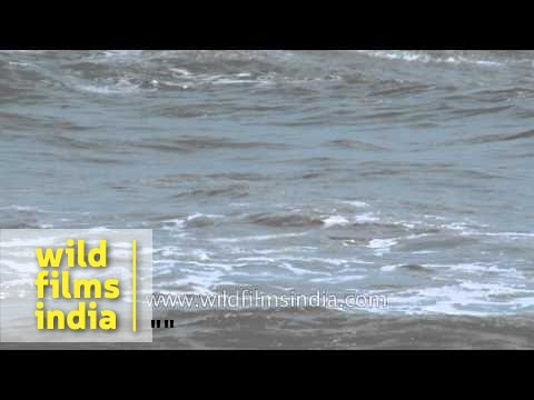 Arabian sea waves: Quilon, Kerala