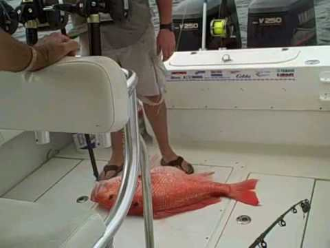 Red Snapper Fishing 30+