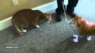 Gato Vs Globo-gato-El Rellano