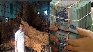 Kỳ bí gốc bàng như hang động được trả 35 tỉ ở Sóc Trăng