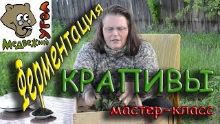 Ферментация КРАПИВЫ - мастер класс