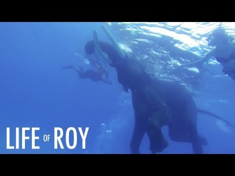 Life Of Roy - Swimming with an Elephant, jumping off boats and diving at a protected reef - Andamans