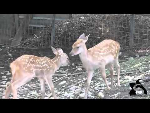20110726子鹿の戯れ
