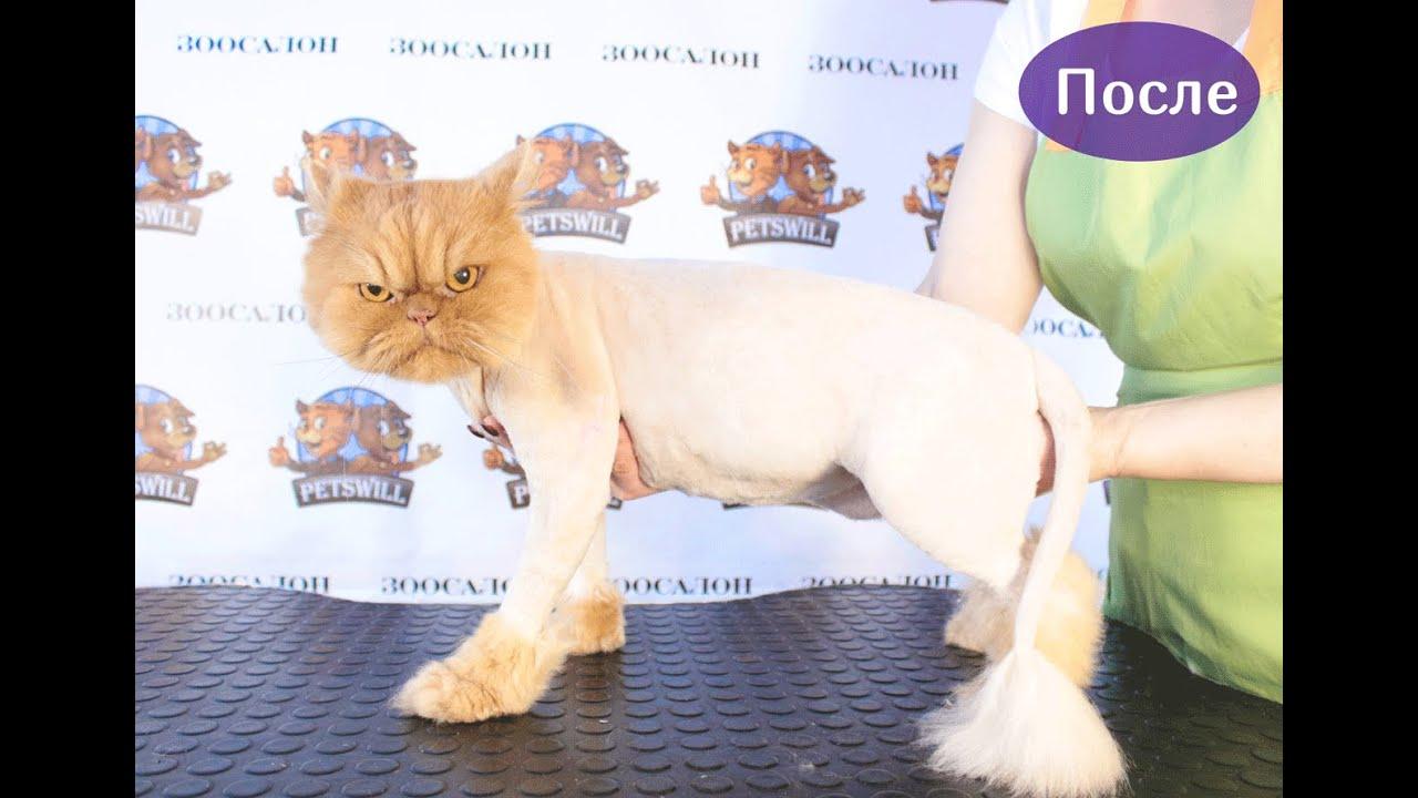 Как подстричь кота в домашних условиях : побрить самому, подстричь 84