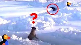 SMART Dog Solves Hide and Seek Snow Maze | The Dodo