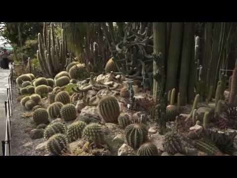 Крым - Ялта - Никитский ботанический сад - май 2013