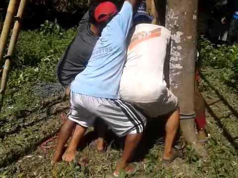 CARA MENDIRIKAN PAGUPON DUSUN SULING DESA BAGON