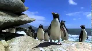 เพนกวินป่วนโลก Petinthai.com