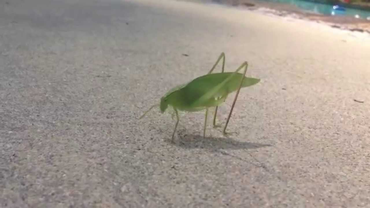 Videographer's Mind Gets Blown When He Accidentally Catches Leaf Bug Pooping