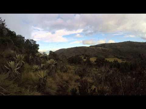 Escapando de Oso Frontino (Anteojos) Páramo La Vieja - Bogotá 2015.