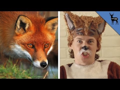 What The Fox Actually Says! video