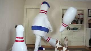Dogs vs Bowling Prank  Funny Dogs