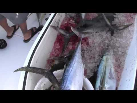 July 2012 Yellowfin Tuna Fishing
