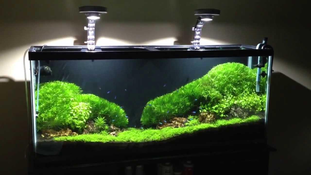 Moss Carpet Idea - YouTube
