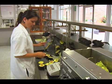 Terravocado - Aceite de Aguacate - Avocado Oil