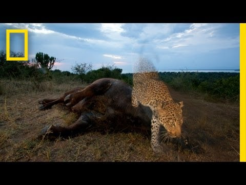 National Geographic Live! - Joel Sartore: Capturing Endangered Species