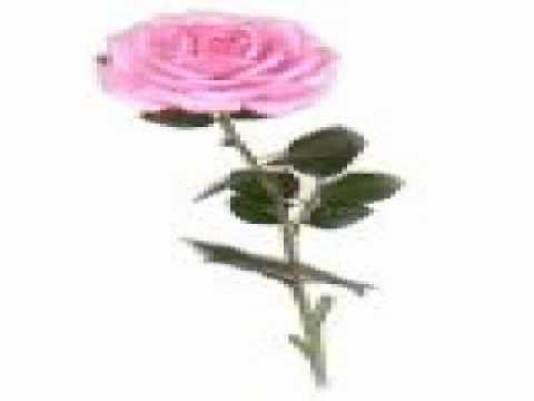 Graham Parker - Long Stem Rose