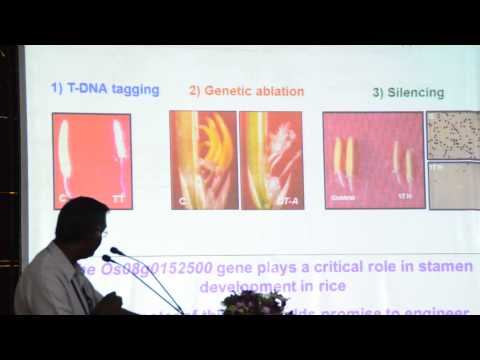 T DNA tagging to study stamen development in rice - Dr Veluthambi-Part II
