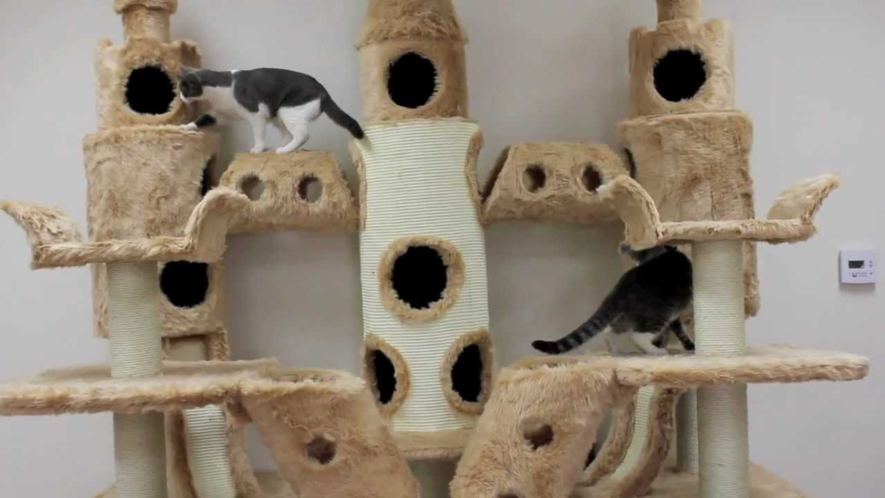 Buckingham palace cat tree by kitty mansions youtube for Epic cat tree
