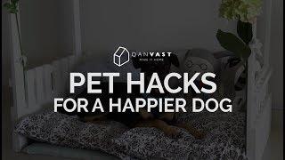 Qanvast Hacks: Pet Hacks For A Happier Dog