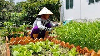 Thu hoạch vụ rau muống đầu tiên | Món Ngon Mẹ Nấu