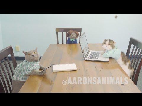 職場で猫たちが参加する会議があるとしたらこんな感じ?!