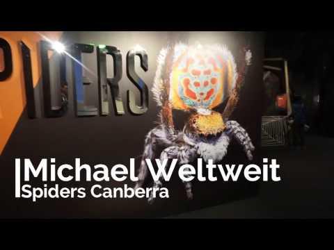 Spinnen in Australien! Vlog19 Michael Weltweit