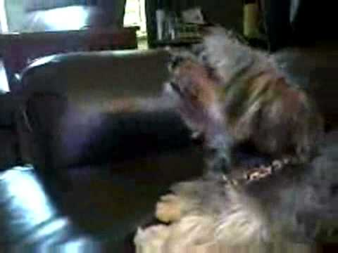 Best Dog Sneezes Ever